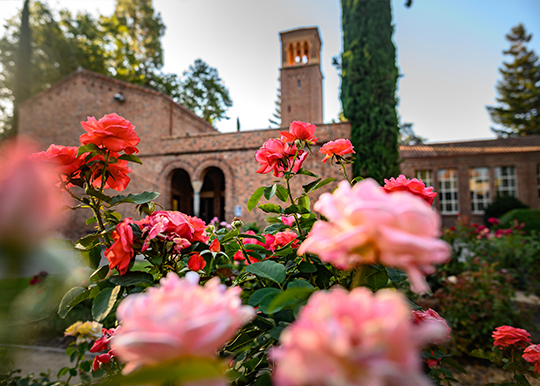 Colorful roses bloom in bright reds and pinks in front of Trinity Hall on Chico State campus.